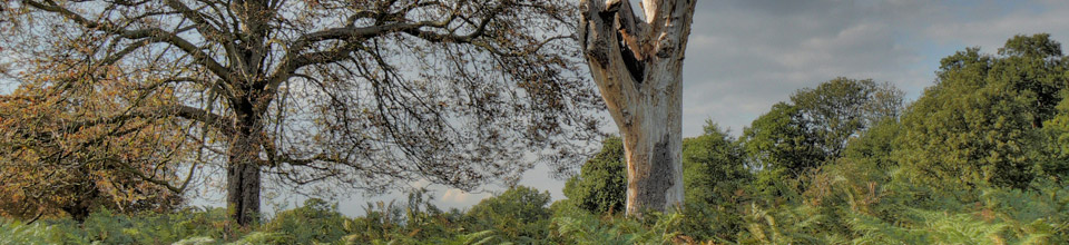 Tree Bracken